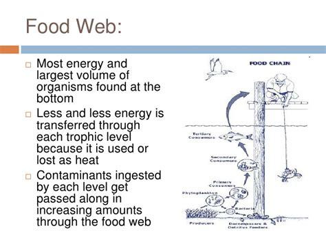 chesapeake bay food web diagram chesapeake bay food web recipes food
