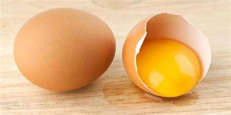 Makanan Ikan Cupang Telur 10 macam makanan ikan cupang yang bergizi tinggi