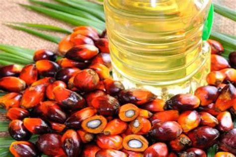 berita sawit sawit minyak nabati paling produktif