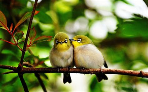 How To Keep Birds Patio by 5 Tips For A Bird Friendly Garden Vitalhosehq