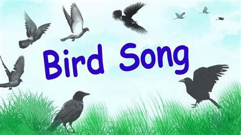 1 hour of relaxing bird songs in wood birds chirping youtube