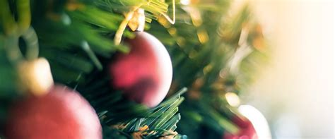 christmas tree hire melbourne by christmas trees delivered