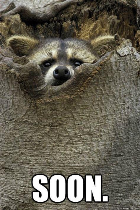 Raccoon Memes - stalker raccoon memes quickmeme