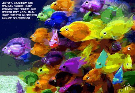 Fisch Bei Diät by Tagesfisch Bunte Fische 2ter Tag Nach Den