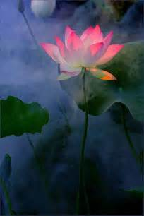 Symbolism Of The Lotus Symbolism Lotus Flower Inkspiration