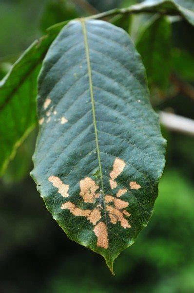 plant leaf spots   treat leaf spot fungus