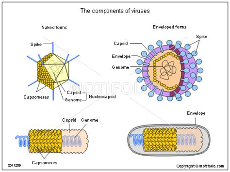 the components of viruses ppt powerpoint drawing diagrams