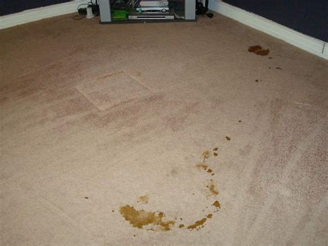 rug cleaning northern va fairfax va carpet cleaning thorough eco green cleaning guaranteed