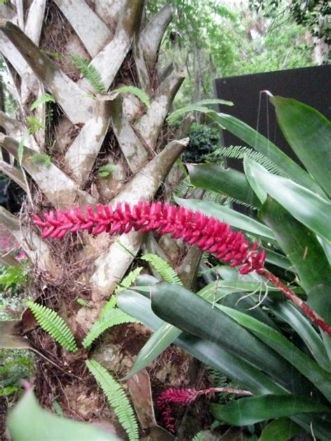 how to care for tropical house plants decoration with tropical plants how to care for