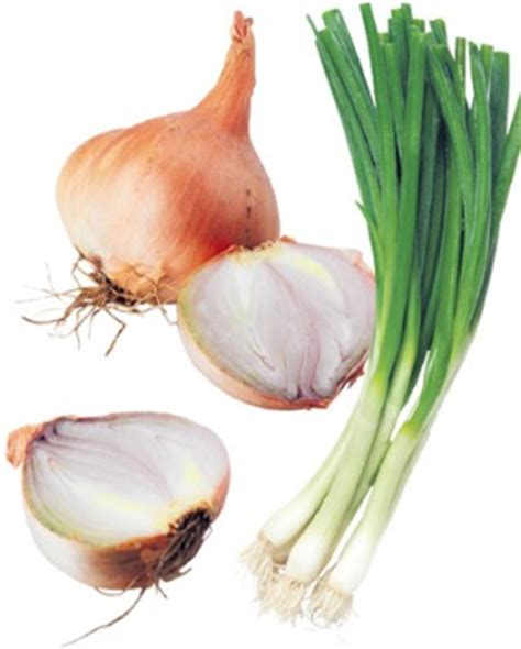 Narrow Lot Plans What Are Spring Onions Versus Shallots