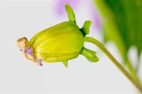 Buy Botany Dissertation by Phd Thesis Ethnobotany Essayhelp308 Web Fc2