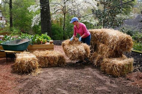 How To Make A Raised Bed From Bales Of Straw Bonnie Plants Using Straw In Vegetable Garden