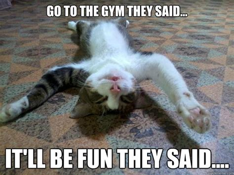 Cat Gym Meme - 5 things i learnt from andy bolton sweat like a pig