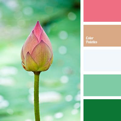 lotus colors lotus color color palette ideas