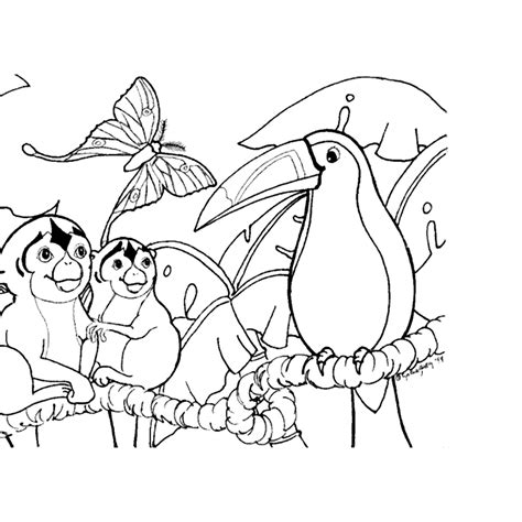 coloring pages of rainforest animals color on pages