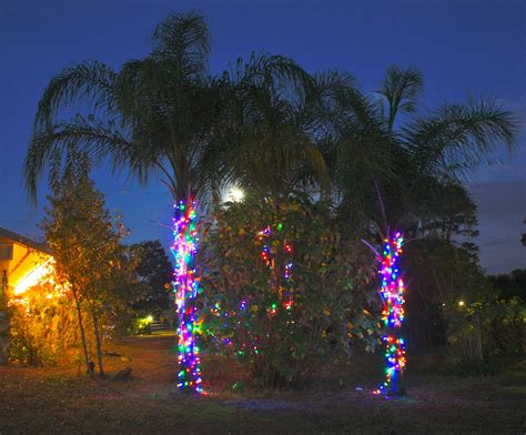 lights on a palm tree christmas palm trees phillip s natural world