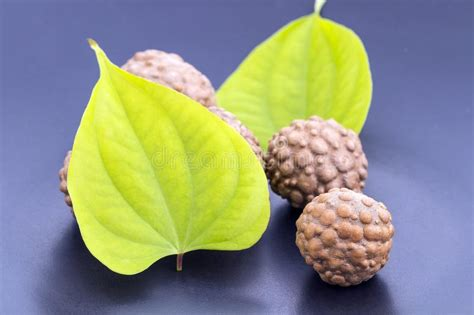 what is the scientific name for air air potato herb scientific name is dioscorea bulbifera stock image image of vegetable