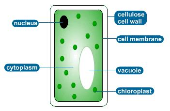 features of organisms revision cards in igcse biology