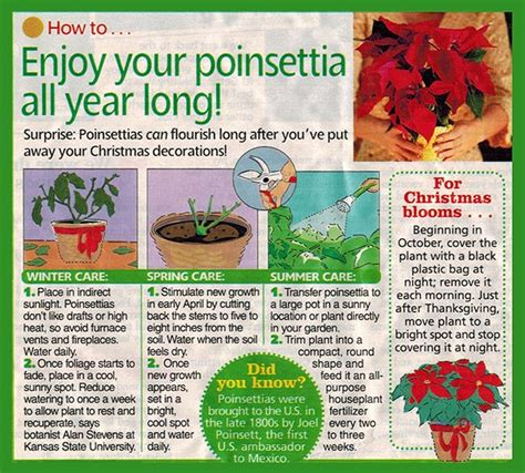 poinsettia fundraisers are a specialty of ace greenhouses