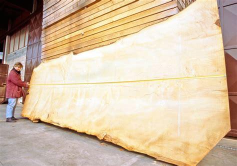 prezzo tavole legno dall albero alle tavole di legno bricolage bricoportale