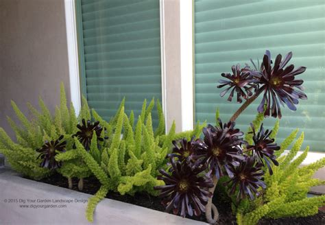 modern landscape with architectural plants and succulents greenbrae ca contemporary