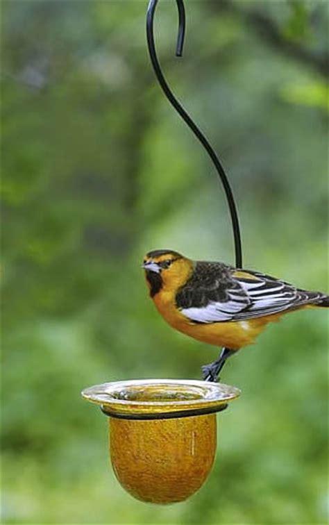 duncraft com mandarin oriole feeder