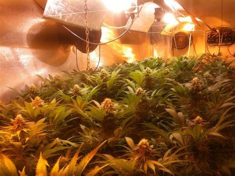 poda marihuana interior cultivo de marihuana interior gu 237 a de cultivo de marihuana