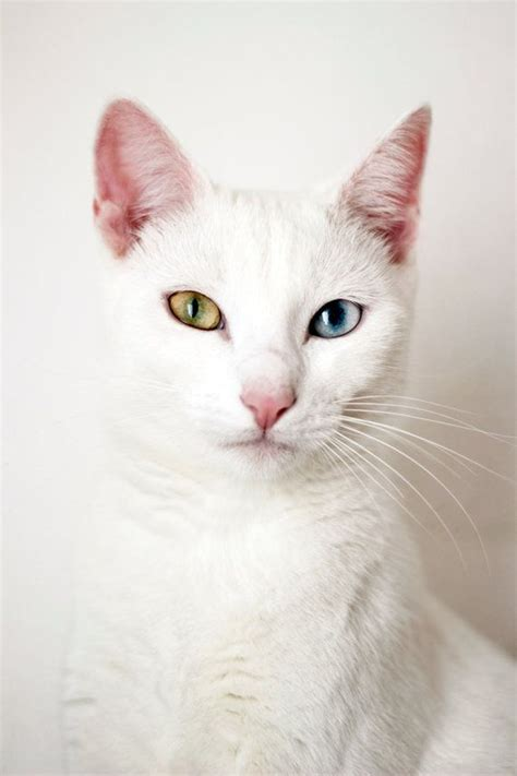Bibit Eye Cat White top 10 interesting facts you didn t about cats top inspired