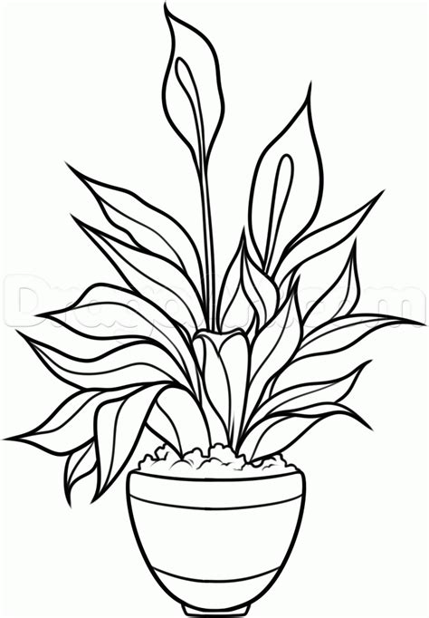 Draw A Plan how to draw a peace plant peace lily step by step