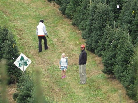 christmas officially begins at pine valley tree farm