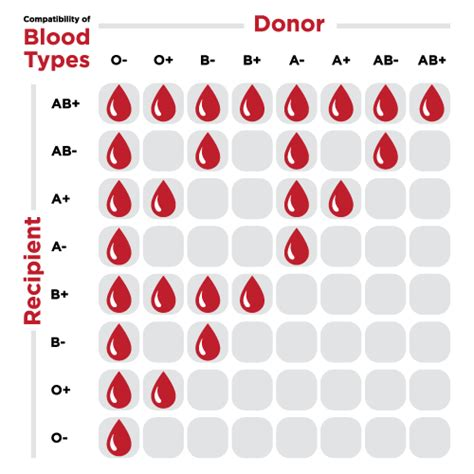 blood types the facts about whole blood canadian blood services