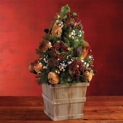 woodland mini christmas tree live tabletop christmas