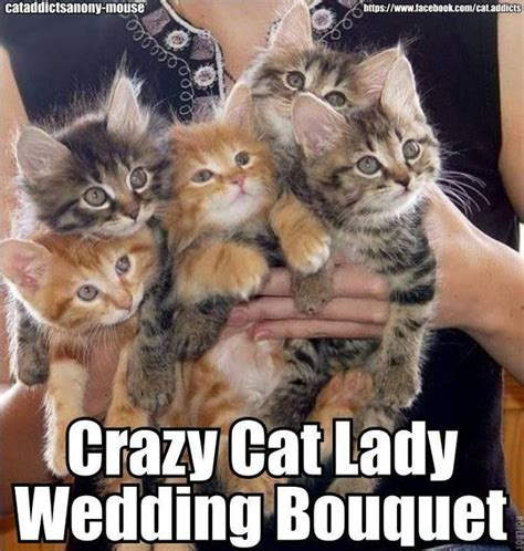 Crazy Dog Lady Meme - 17 best ideas about cat wedding on pinterest weddings