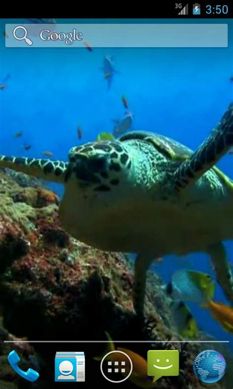 sea turtle live wallpaper free sea turtle live wallpaper android apps on play
