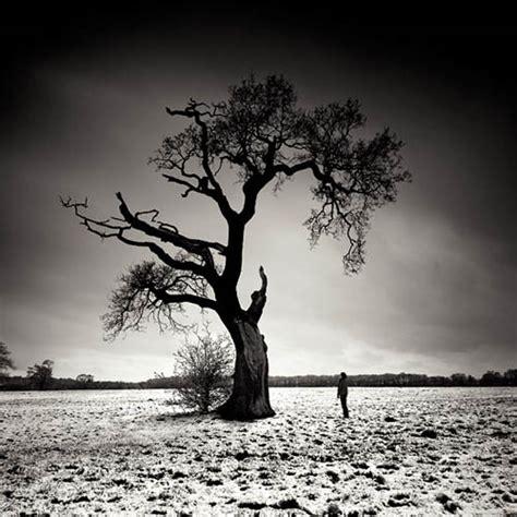 tree photography 100 breathtaking exles of tree photography pixel curse