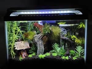 betta tank 2 5 gallon heavily planted betta aquarium 145576 fish tank s pinterest betta aquarium