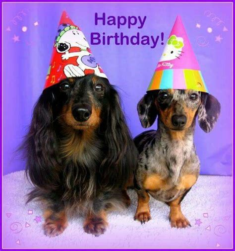 Dachshund Birthday Meme - 525 best images about dachshunds birthday greetings