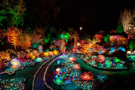 evening photo christmas lights at butchart gardens