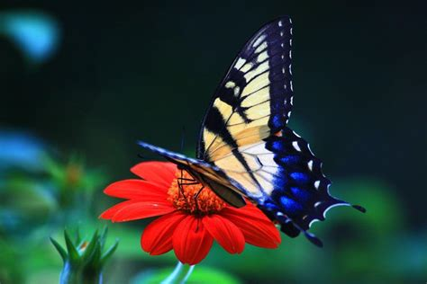 desk top pictures butterfly desktop wallpapers wallpaper cave