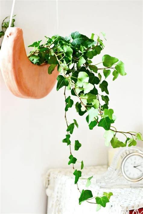 diy hanging plants indoors ideas balcony garden web