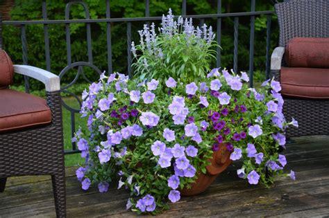 winterharte balkonpflanzen bilder winterharte balkonpflanzen pflanzarten und pflege tipps