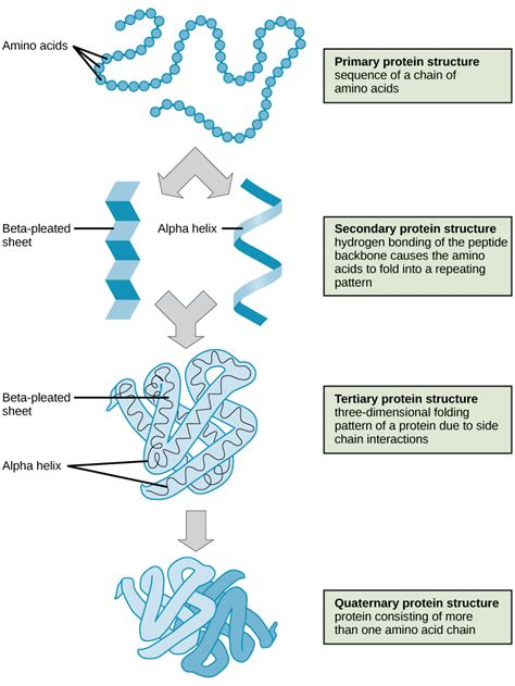 3 proteins in the 2 3 biological molecules concepts of biology 1st