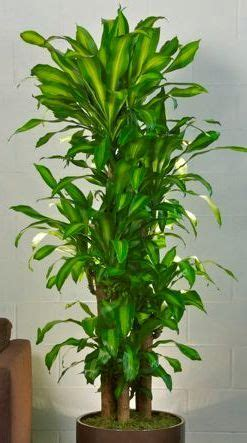 indoor house plants sale 78 best ideas about indoor plants online on pinterest