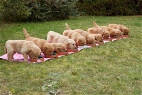 when can puppies be weaned top tips for weaning puppies