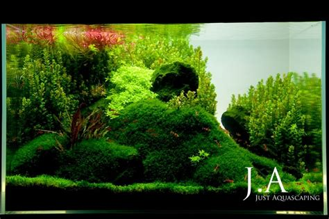 shrimp tank aquascape lush shrimp tank aquascapes aquarium layouts tanks and
