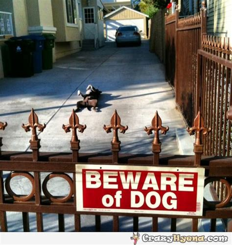 in your house beware of dog in your house beware of 28 images in your house 8 beware of review 17 best ideas