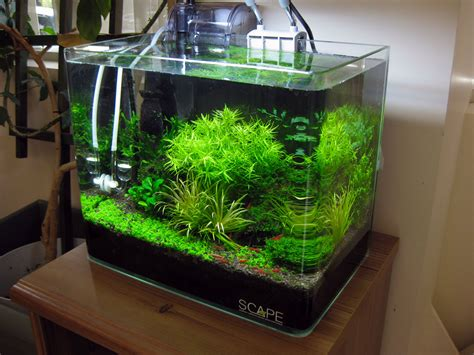 aquascape shrimp tank shrimp tank with azoo palm filter pets aquariums