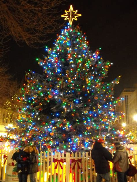 wonderful christmas tree pictures