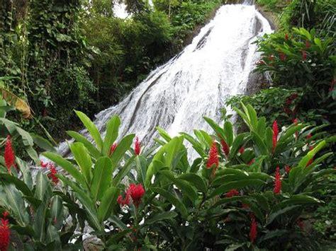 Shaw Botanical Gardens Shaw Park Botanical Garden Ocho Rios Jamaica My Way
