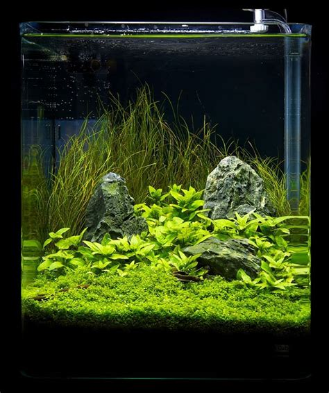 aquascaping layouts simple but pleasing nano setup aquascaping layout